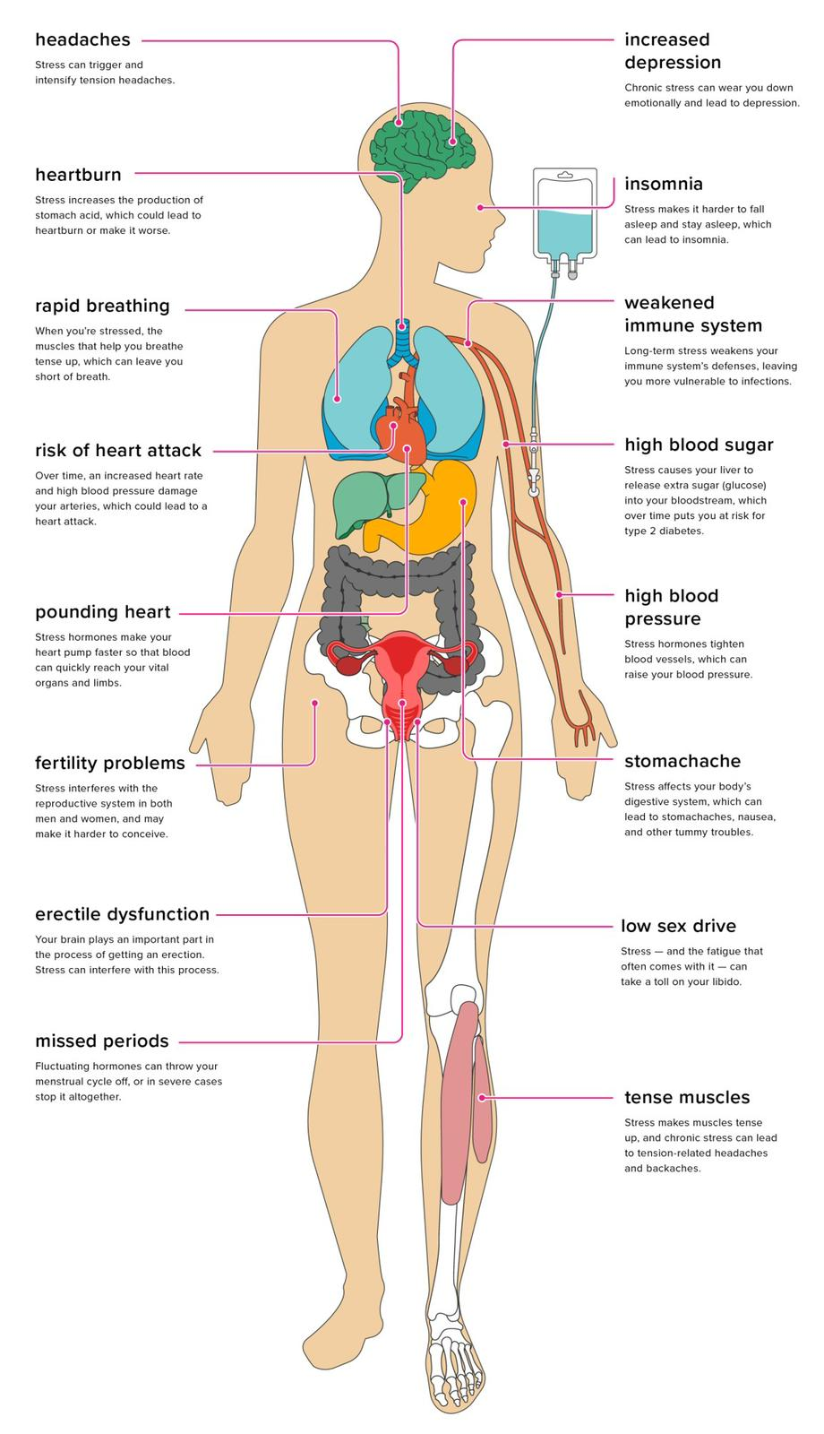 picture of the human body and stress zones